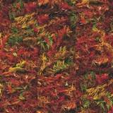 Autumn Brake
